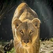 В мире животных group on My World