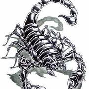 Скорпион ! on My World.