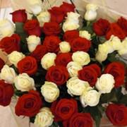 Ирина Крутоус on My World.