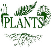Plants company on My World.